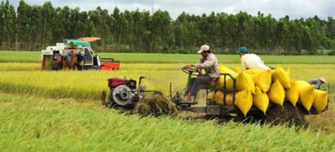 """Vì sao nông nghiệp không còn là """"trụ đỡ"""" của nền kinh tế?"""