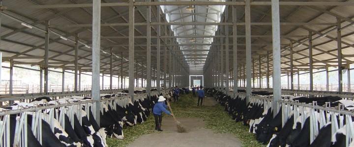 'Mốt' làm nông dân – Bài 2: Khối phân bò tiền tỷ của bầu Đức