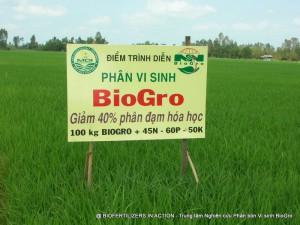 Cánh đồng khảo nghiệm phân bón vi sinh BioGro