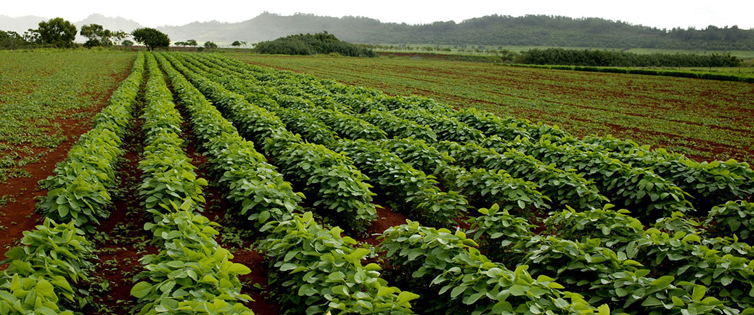 Phân vi sinh cho cây trồng