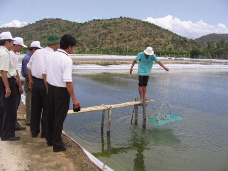 Thăm quan một hồ nuôi tôm bằng chế phẩm BioGro tại Nha Trang