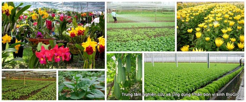 Phân vi sinh cho hoa, rau, vườn ươm