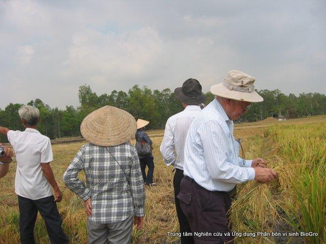Các chuyên gia trong và ngoài nước kiểm tra kết quả bón phân vi sinh BioGro trên cây lúa