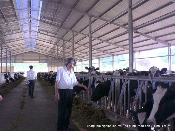 Xử lý chất thải chăn nuôi bò tại trang trại sữa Mốc Châu