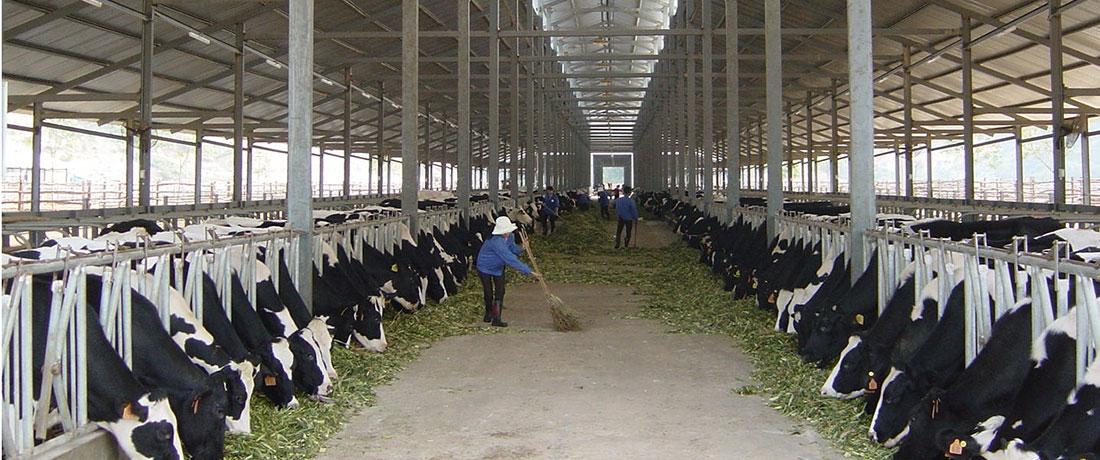 Xử lý chất thải chăn nuôi