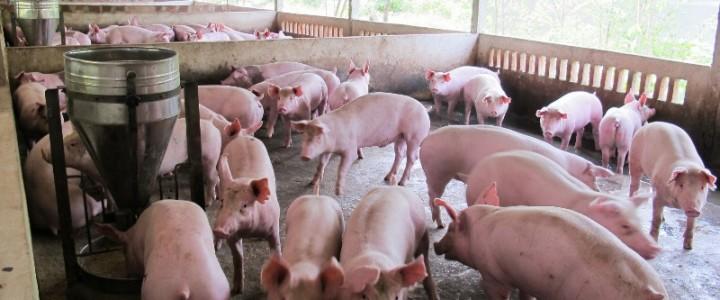 Xử lý chất thải trong chăn nuôi heo