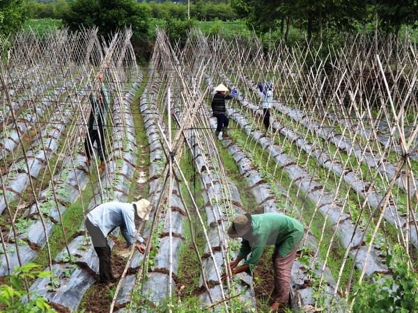 Một cơ sở sản xuất rau an toàn, đạt tiêu chuẩn VietGap